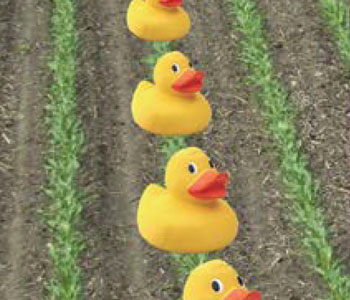 Get your Ducks in a Row with TerraStar